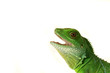 Echse Lizzard Reptil wasseragame