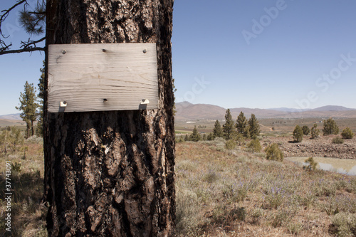 Old grungy wood sign on a pine tree