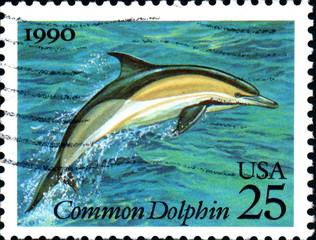 Common Dolphin. 1990. US Postage.