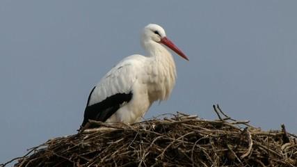Cocogna nel nido in inverno
