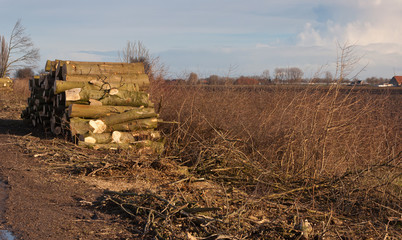 A pile with sawn timber in a rural countryside