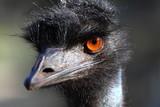 Fototapete Australien - Schnabel - Vögel