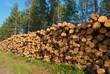 Stack of freshly cut trees