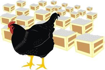 Курица и яйца