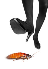 A high heel about to step on a cockroach