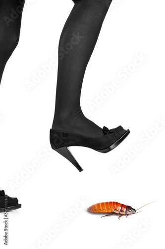 A woman shoe about to step on a cockroach