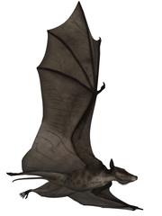 Icaronycteris - 3D Dinosaurier