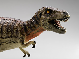 tyrannosaurus close-up