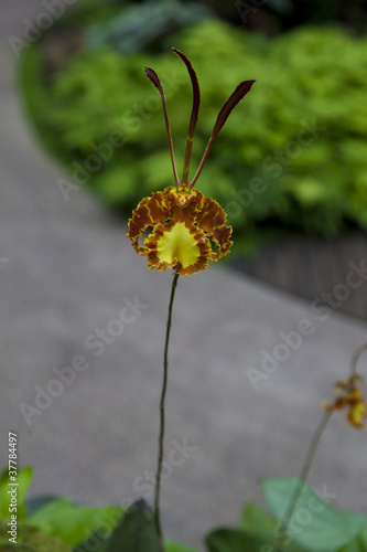 orchid flower at park in singapore