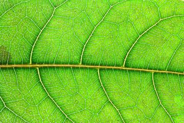 green leaf texture, Macro
