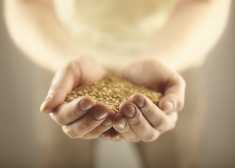 Wheat grains in the male hands. Harvest concept