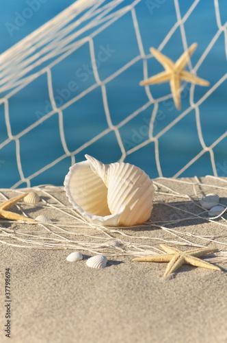 Strand-Stillleben mit Seesternen und Muscheln, Urlaubsträume