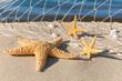 Urlaubserinnerungen, Stillleben mit Seesternen