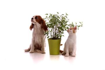 Hund und Katze mit Pflanze