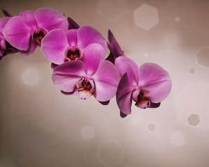 Pink orchid over brown background in retro style