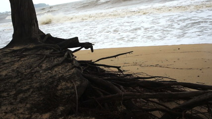 Tree during monsoon season