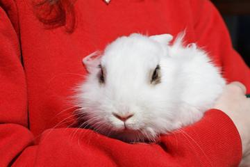 white rabbit - coniglio bianco