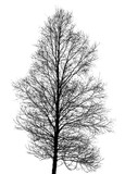 black tree silhouette on white