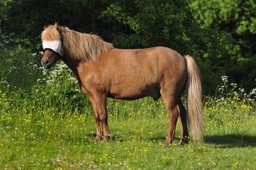Saddle-horse with eye shelter