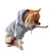 chihuahua en sweatshirt donnant la patte