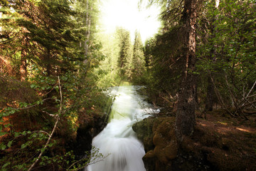 Patagonian Forest cascade and sunrays