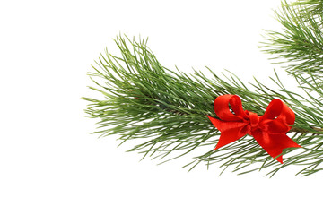 Fir tree branch with red bow