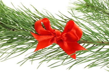 Fir tree branch with red bow on white background