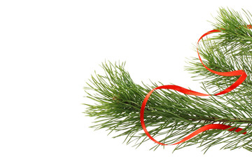 Fir tree branch with red ribbon