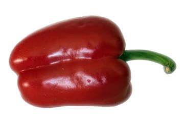 Rote Paprika liegend