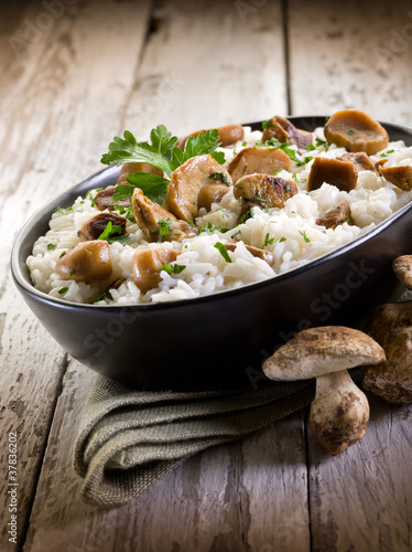 Alabama Edible Mushrooms http://it.fotolia.com/id/37836202