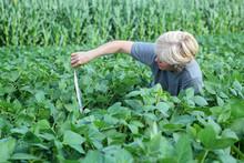 Ekspert agronomia kontroli jakości soi