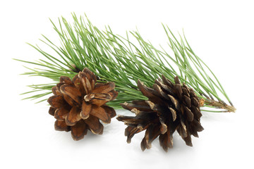 Cones with fir tree branch on the white background