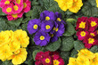 Fototapete Frühling - Blume - Blume