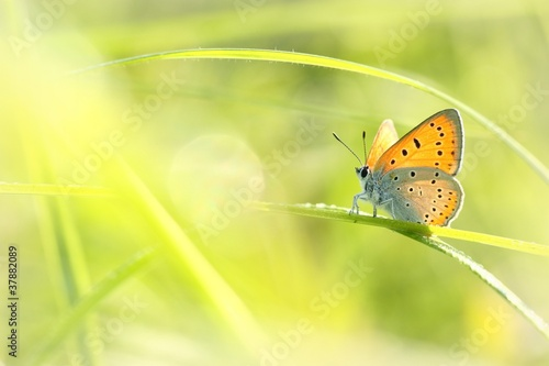 Fotobehang Vlinder Butterfly on a spring meadow in the sunshine