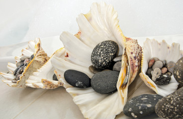 Decoration in my bathroom: shells with grey stones