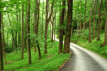 Curvy mountain road through lush forest