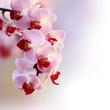 Fototapeten,hintergrund,dekorativ,schöner,valentin