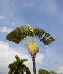 Palm tree at singapore