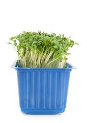 Fresh garden cress