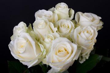 Bouquet of white roses (hybrid tea) over black background