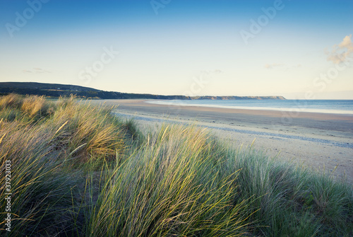 grass on sandy beach, pembrokeshire, wales