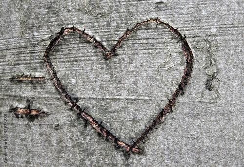 Herzsymbol in Buchenrinde