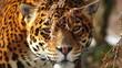 jaguar guarding