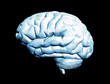 Brain isolated on black