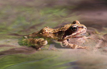Frog in Creek