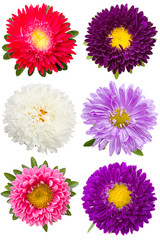 Six different asters