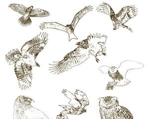 Sammlung von Greifvögeln