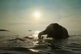 Fototapete Asiatische spezialitäten - Bathing - Säugetiere
