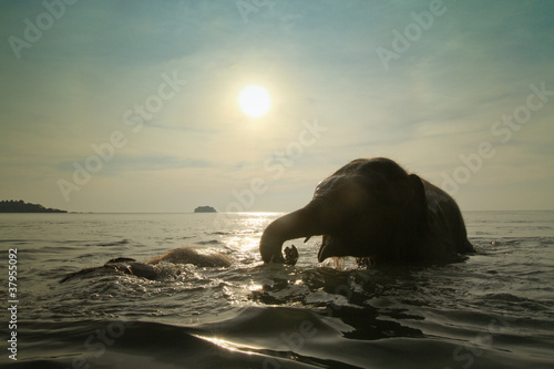 Fototapeta azja - kąpiel - Dziki Ssak