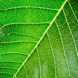 Green leaf with organic pattern poster